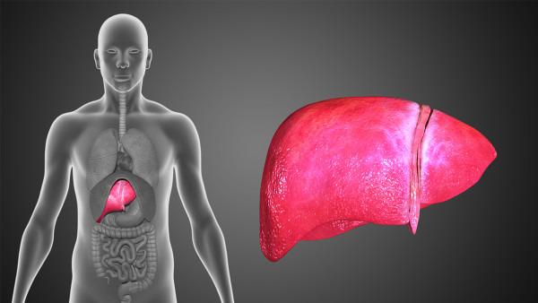 脂肪肝的症状有哪些